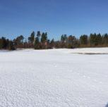 Bodaholm stängd tis 18 april. Bromma öppen med vintergreener.